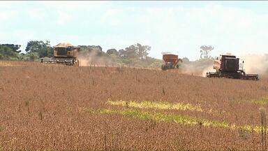 Paraná é o segundo estado que mais produz soja no país - A expectativa é uma produção de quase 20 milhões de tonelada de soja neste ano.