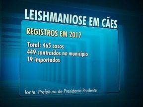 Presidente Prudente fecha 2017 com 468 casos de leishmaniose em cães - Dados foram divulgados pelo Centro de Controle de Zoonoses.