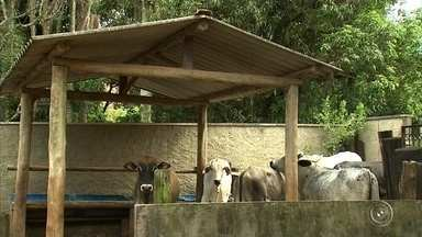 Vigilância confirma segundo caso de raiva animal em bois na zona rural de Jundiaí - A Unidade de Vigilância de Zoonoses (UVZ) confirmou nesta sexta-feira (22) o segundo caso de raiva animal em bois na Zona Rural de Jundiaí (SP).