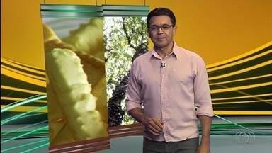 Veja os destaques do Jornal do Campo deste domingo (25) - Aprenda como fazer biscoito de queijo.