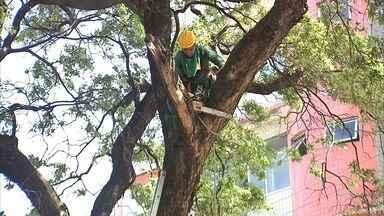 Prefeitura intensifica poda de árvores no período de chuva para evitar acidentes - Confira mais notícias em G1.globo.com/ce