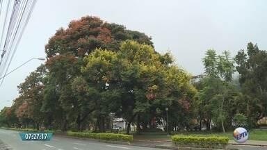 Defesa Civil faz trabalho para evitar quedas de árvores em Poços de Caldas, MG - Defesa Civil faz trabalho para evitar quedas de árvores em Poços de Caldas, MG
