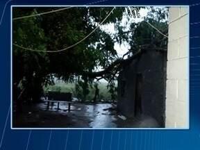 Raio derruba árvore sobre residência na zona rural de Paulicéia - Ninguém ficou ferido.