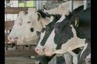 Decretada situação de emergência econômica em Tenente Portela - A crise no setor leiteiro prejudica produtores rurais e a cidade.