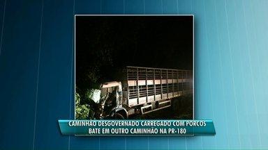 Caminhão desgovernado, carregado com porcos, bate em outro caminhão na PR-180 - O caminhão com porcos ainda bateu em uma árvore. Ninguém ficou ferido.