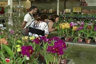 Festival das Orquídeas do Itapeti começou neste sábado em Mogi - Evento vai até o dia 18 de março.