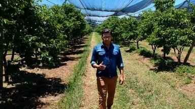 Veja os destaques do Jornal do Campo deste domingo (4) - Confira os principais assuntos do agronegócio e da cultura rural em Goiás.