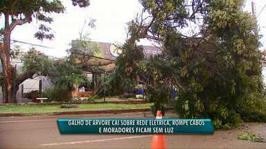 Galho de árvore cai em rede elétrica e moradores ficam sem luz em Cascavel - Energia elétrica deve ser restabelecida perto das 20h.
