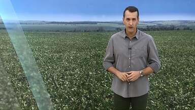 Preço da soja anima agricultor - Veja esta e outras notícias na coluna agro