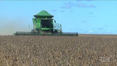 Balsas realiza abertura da colheita de grãos - Evento tem o objetivo de divulgar o potencial de uma das principais fronteiras agrícolas do país que este deve colher uma super safra.