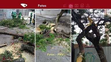Galho de árvore caído atrapalha a passagem dos carros na reta da penha, ES - Funcionários da prefeitura de Vitória foram cortar o galho e para liberar a pista