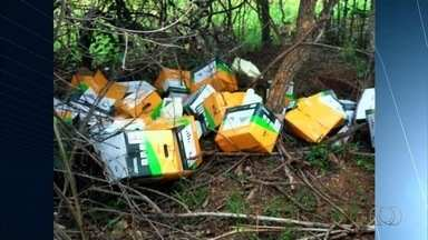 PM recupera defensivos agrícolas roubados avaliados em R$ 1,2 milhão - Corporação encontrou 205 galões do produto em três pontos diferentes na propriedade, em Cabeceiras, Goiás. Drogas e munições também foram localizadas.