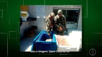 Policiais ambientais apreendem cerca de 70kg de camarão; crustáceo está em época de defeso - Assista a seguir.