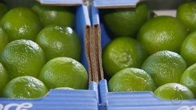 Empresários do noroeste paulista desejam investir na produção de limão taiti - os empresários do noroeste paulista desejam investir na produção de limão taiti, após o consumo da fruta aumentar em outros países.