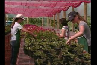 Exemplo de protagonismo feminino em Tuparendi - Três mulheres investem no cultivo de flores e garantem renda pra família.