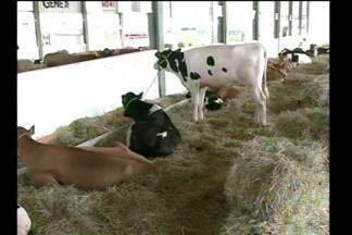 A Expoterneira em Três de Maio evidencia o leite e a soja - Produtores realizam negócios até domingo no Parque de Exposições.