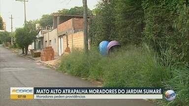 Moradores reclamam de mato alto no Jardim Sumaré em Ribeirão Preto - Matagal invadiu parte da calçada da Rua Barão do Amazonas.
