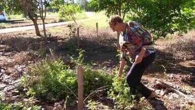 Moradores reclamam de insegurança provocada por mato alto em quadra de Palmas - Moradores reclamam de insegurança provocada por mato alto em quadra de Palmas