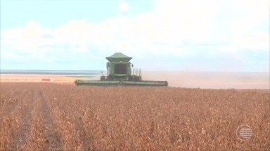 Produtores de grãos do cerrado do Piauí comemoram colheita farta em 2018 - Produtores de grãos do cerrado do Piauí comemoram colheita farta em 2018