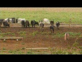 Produtores rurais comemoram chuvas no mês de abril 2018 - Eles que conseguem tratar do gado somente a pasto.