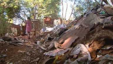 Menino de 8 anos morre após ser picado por escorpião em Ribeirão Preto, SP - Vizinhos disseram que o garoto ajudava a tia a retirar entulho nos fundos da casa.
