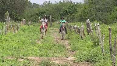 Corrida de jericos agita cidade de Panelas, em Pernambuco - A disputa é conhecida como a fórmula 1 dos jumentos
