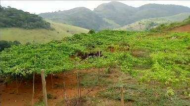 RJ Rural dá dicas para evitar aparecimento de pragas em lavouras - Tiago Tavares explica como o problema vem afetando a produção e reduzindo as vendas dos maracujás.