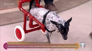 André constrói cadeiras de rodas para animais com deficiência - Projeto começou para ajudar o cachorro de uma amiga. A veterinária Rita Ericson fala sobre a adoção de animais deficientes, idosos e que já sofreram maus tratos