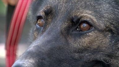 Pesquisa da Ufes pode melhorar desempenho de cães de resgate - Cão que veio da Alemanhã foi doado para bombeiro.
