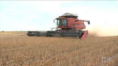 Safrinha de milho pode ter perda de 60% no sul do Maranhão - Previsão é do IBGE com base em informações dos agricultores, bancos e empresas de consultoria agrícola