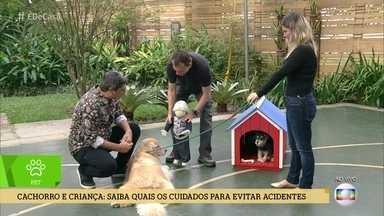 Alexandre Rossi ensina como evitar acidentes com crianças e cachorros - Convivência é possível, mas exige atenção por parte dos pais