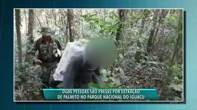 Palmiteiros são presos no Parque Nacional do Iguaçu - Eles estavam extraindo palmito de maneira ilegal.