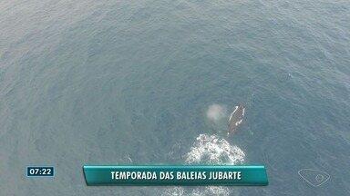Temporada das baleias jubarte começou no Espírito Santo - Ambientalista falou sobre o assunto no Bom Dia ES.