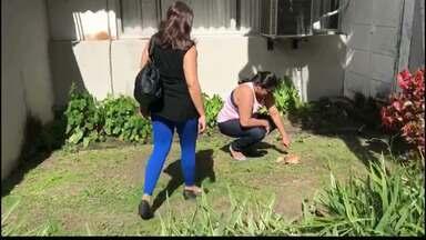 Gatos aparecem mortos no Centro Administrativo da prefeitura de João Pessoa - Polícia está investigando o caso.