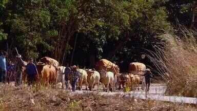 Veja a história do carro de boi e a tradição desse meio de transporte em Goiás - Veja a história do carro de boi e a tradição desse meio de transporte em Goiás