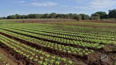 Maioria das cooperativas de MS estão ligadas à produção rural - Os produtores que participam desses grupos sentem as vantagens.