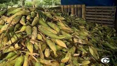 Consumidor ainda pode encontrar milho para vender neste sábado (30) - Mesmo com o fim das festas juninas, vendedores continuam comercializando produto em Maceió.