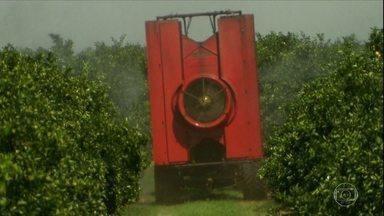 Globo Rural – Edição de 01/07/2018 - Programa mostra os insetos que trabalham em benefício do agricultor. Os inimigos naturais, que se alimentam das pragas e ajudam a reduzir custos na lavoura. Um mercado que não para de crescer, e que tem usado a tecnologia dos drones nas plantações. Veja também outras notícias do campo.