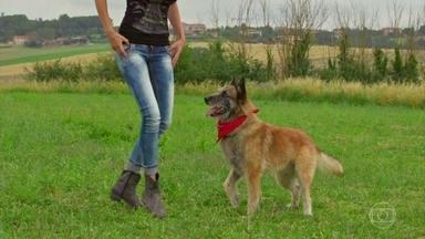'Domingão Aventura': João Paulo Krajewski vai à Itália para mostrar um cachorro dançarino - O biólogo também tira dúvidas das plateia sobre adestramento