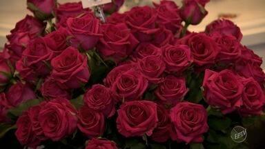 Enflor, em Holambra, mostra novidades do mercado que cresceu 15% no último ano - Evento com lançamentos na área de floricultura acontece nesta terça-feira, das 9h às 17h.