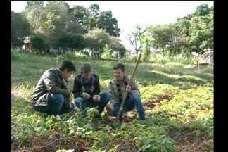 Estudantes de Bom Progresso desenvolvem trabalho sobre a batata doce - Projeto vai ser apresentado em feira na Inglaterra.