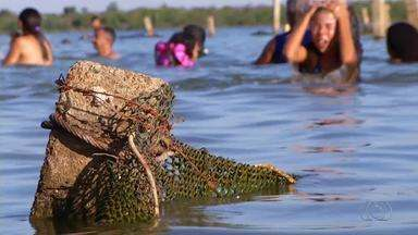 Praias de Palmas estão com as telas de proteção estragadas - Praias de Palmas estão com as telas de proteção estragadas