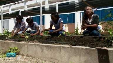 Implantação de hortas em escolas amplia conhecimentos e ajuda a melhorar alimentação - Confira a reportagem.