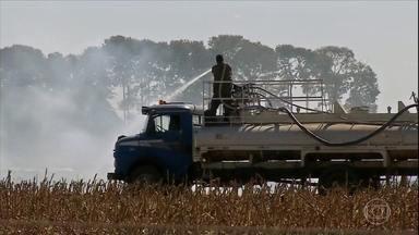 Veja as notícias da semana no campo - Colheita do milho no Paraná; proibição de queimadas em MT; começa a safra do fumo no RS; produtores reclamam do preço da banana em SP