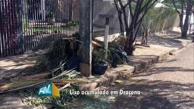 Acúmulo de sacos com folhas nas calçadas gera reclamações - Moradores enfrentam o problema em Dracena.