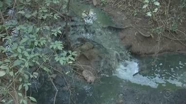 Rio Talhado em Rio Preto tem nível de oxigênio considerado normalizado - A água esverdeada permanece presente no Rio Talhado, em São José do Rio Preto (SP), mas o nível de oxigênio se normalizou após a denúncia da TV TEM sobre o lançamento de esgoto no local.