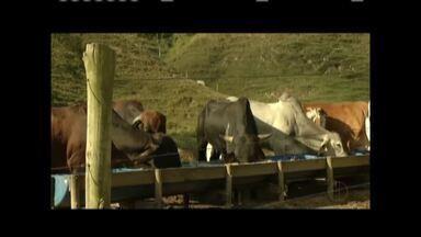Inverno tem prejudicado pasto e rebanho tem perdido peso - Produtores têm optado por confinar o gado.