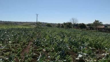 Baixas temperaturas preocupam produtores rurais - Produtores de hortifruti estão tomando alguns cuidados.