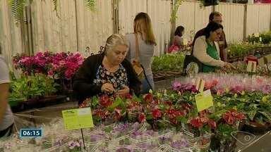 Tradicional Feira de Holambra acontece em Cachoeiro de Itapemirim, ES - A praça da cidade ganhou um colorido a mais, com flores e plantas.