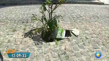 Árvore cresce em buraco no Jardim Oceania, em João Pessoa - Moradores pediram ajuda ao JPB.